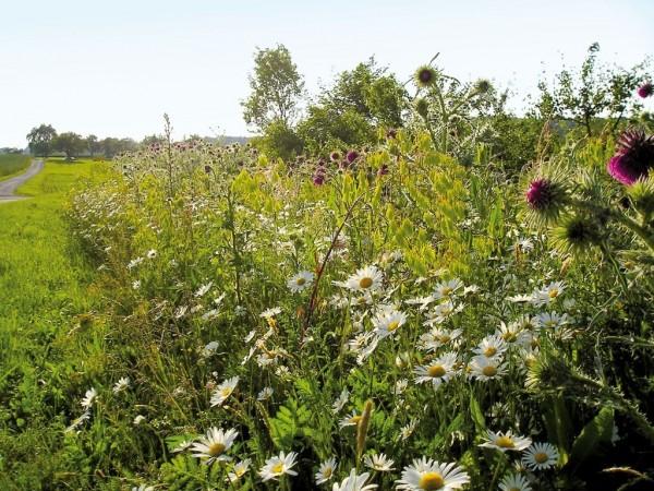 Saatgut für Schmetterlingswiese und Bienenweide