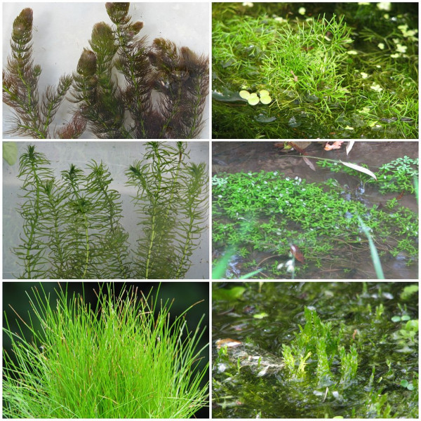 Sauerstoffpflanzen Sortiment