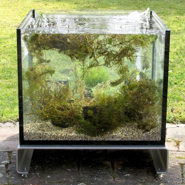 Miniteich TerrassenFisch 50 cm lang