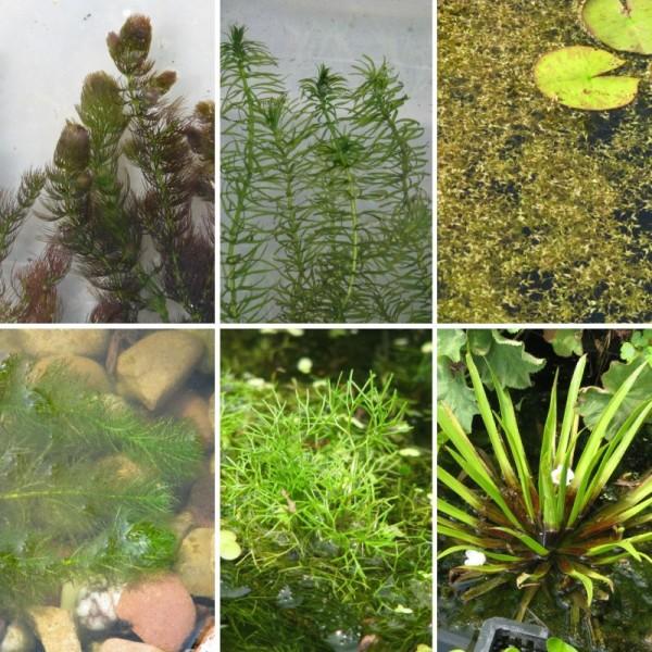 Unterwasserpflanzen Sortimente